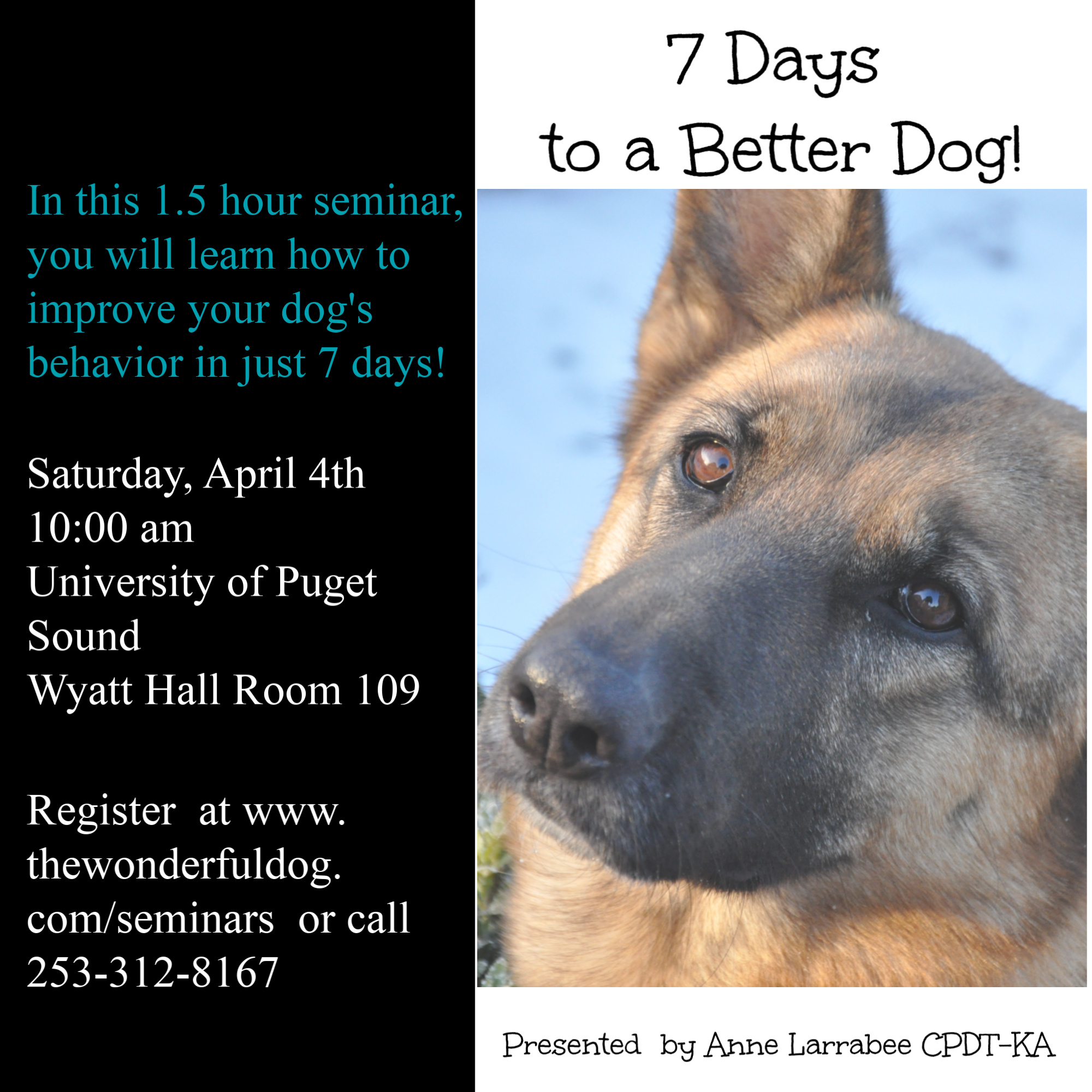 7 Days to a Better Dog