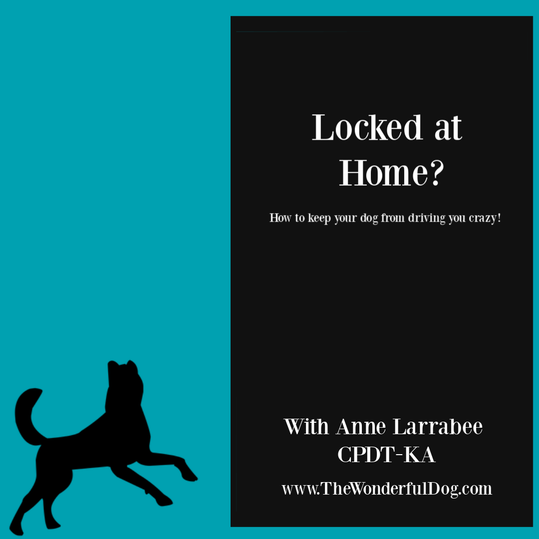 Locked at home with dog